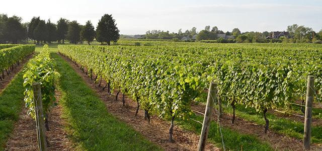 代表的なブドウの品種とワインの特徴