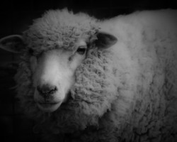 羊のロゴのムートン・ロートシルト 干支にちなみ中国で攻勢