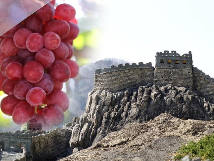 中国がフランスを抜く――ワイン用葡萄栽培面積