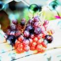 「ゼオライト膜」でワインのうまみ成分をアップする新技術開発