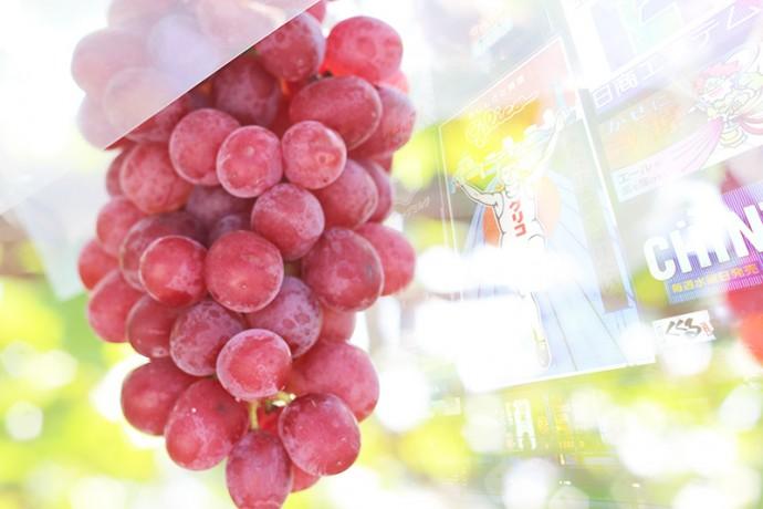 関西ワイナリー各社、葡萄生産の増加へ