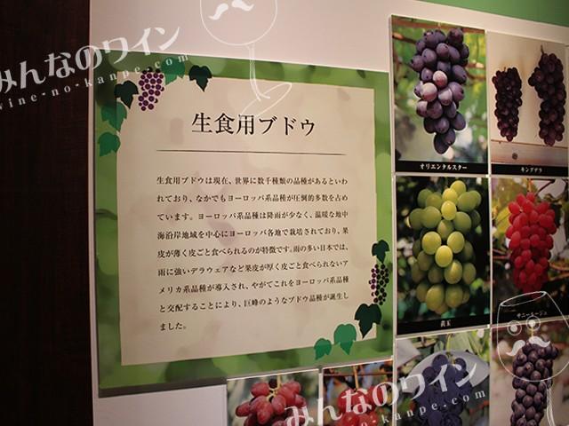 ワイン展 葡萄