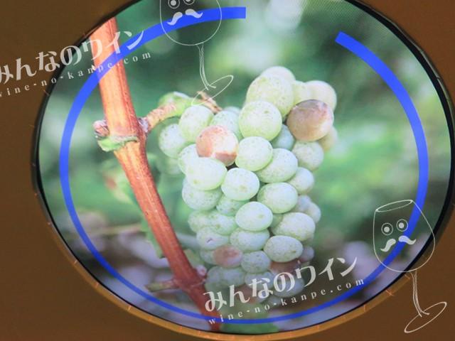 ワイン展 選果ゲーム