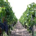 約22億円-ロビン・ウィリアムズが所有したワイン農園売却