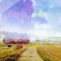 長野のワイナリー、自社農園を相次ぎ拡大