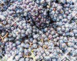 「甲州市かつぬまぶどうまつり」10月1日開催!ワイン無料サービスも