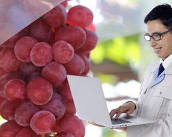 長野にワイン用葡萄の分析センター新設