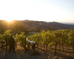 高級ワインをグラスで楽しむチャンス!「ナパヴァレー・バイザグラスフェア2017」