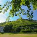 【5月19日】予約不要の南仏ワイン試飲会!北ローヌのヴィオニエを味わおう