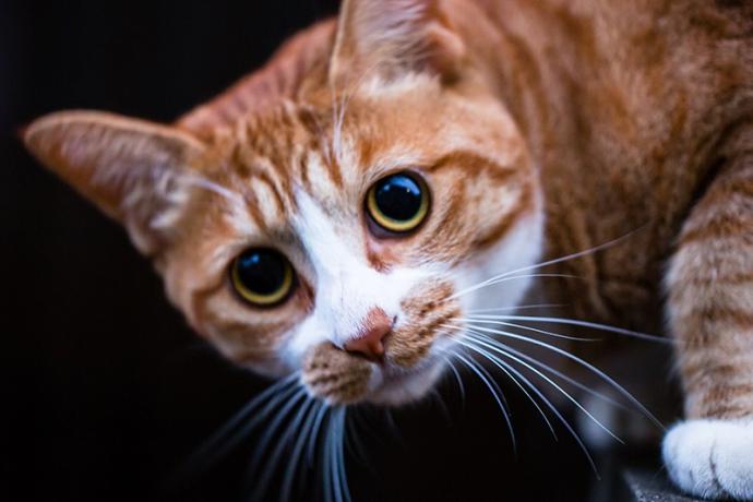 2月22日は猫の日♪猫がデザインされたワイン3選!