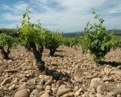 【10月14日】予約不要!aVin主催の南仏産ビオワイン&ナチュールワイン試飲&販売会
