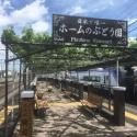 日本で唯一!駅のホームで育つワイン用葡萄