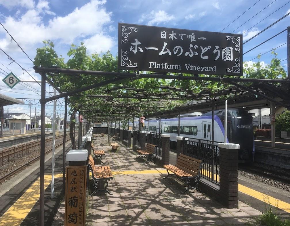 日本で唯一!駅のホームで育つワイン用葡萄、2020年の収穫に向け作業を予定