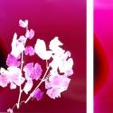 フランス人写真家エルサ・レディエ氏による「Heatwaveシリーズ」が『KYOTOGRAPHIE 京都国際写真祭 2020』にて日本初公開