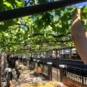 日本初!駅構内で栽培されたメルローで造ったワイン『塩尻駅メルロ2019』120本限定販売
