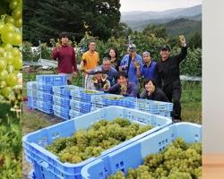 南三陸産の葡萄から生まれた初のワイン『MINAMISANRIKU CHARDONNAY 2020』発売
