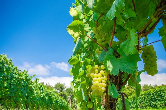環境に優しいワイナリーを認定する『ロバート・パーカー・グリーンエンブレム』導入